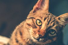Free Black And Brown Tabby Cat Royalty Free Stock Images - 109909139