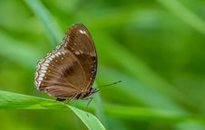 Free Macro Photography Of A Butterfly Royalty Free Stock Photos - 109909188