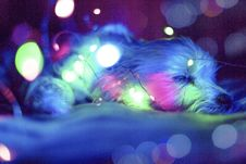 Free Blue , Green And Pink Light Bokeh Royalty Free Stock Photos - 109909198