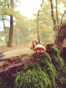Free Two Mushrooms With Green Plants Stock Photos - 109909273