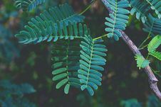 Free Selective Focus Photography Of Green Fern Plant Stock Photography - 109909342