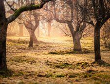 Free Brown Trees And Green Grass Photo Taken Stock Photos - 109909443