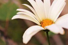 Free Macro Shot Photography Of Daisy Flower Stock Images - 109909454