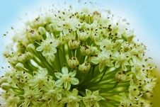 Free Macro Shot Of Green Flower Buds Stock Photography - 109909472