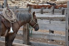 Free Brown Horse Inside Wooden Fence Royalty Free Stock Photography - 109909597