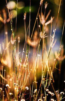 Free Closeup Photography Of Grass Stock Image - 109909691