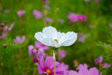 Free Selective Focus Photography Of White Petaled Flower Stock Photography - 109909742