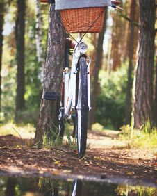Free White Beach Cruiser Bicycle Parked Beside Brown Tree Royalty Free Stock Photography - 109909757