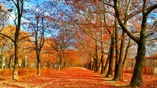 Free Pave Covered On Red Leaf Between Trees Stock Image - 109909851