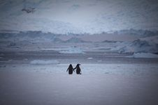 Free Two Penguins At Snow Area Royalty Free Stock Photos - 109909888