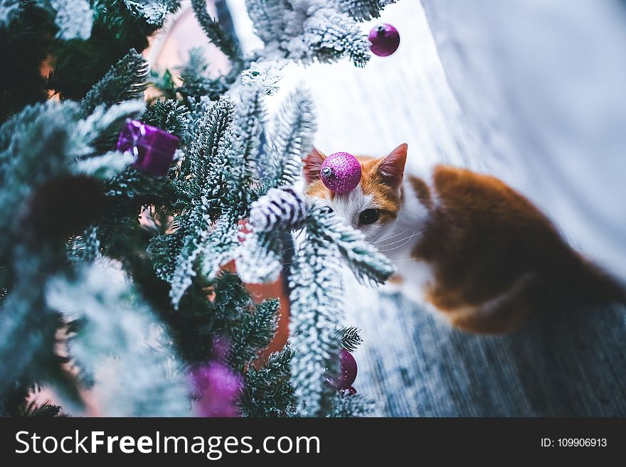 Cat under the Christmas Tree