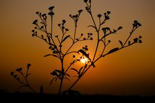 Free Silhouette Of Plant During Sunset Royalty Free Stock Photography - 109910017
