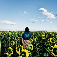 Free Woman Walking In Bed Of Sunflowers Royalty Free Stock Images - 109910029