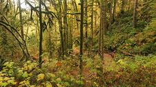 Free Green Forest Stock Image - 109910171