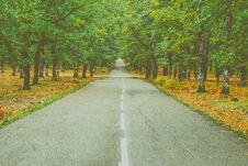 Free Landscape Photography Of Concrete Road Between Trees Royalty Free Stock Photo - 109910225