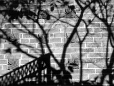 Free Black And White Photo Of Shadows On The Wall Stock Photography - 109910252