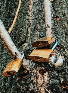 Free Three Brass Padlocks On Tree Branch Royalty Free Stock Photography - 109910297