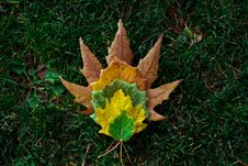Free Brown, Yellow, And Green Leaves On Green Grass Royalty Free Stock Photography - 109910487