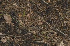 Free Photography Of Twigs On The Ground Stock Photography - 109910512