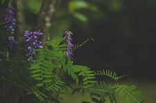Free Green And Purple Leafed Plant Stock Image - 109910741