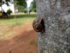 Free Shallow Focus Photography Of Brown Snail On Tree Trunk Stock Images - 109910814