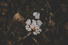 Free White Clustered Flowers Royalty Free Stock Photos - 109910848