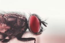 Free Close-up Photograph Of House Fly Royalty Free Stock Photos - 109910948