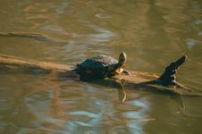 Free Brown Turtle On Wood Trunk Stock Image - 109911071