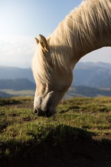 Free Selective Focus Photo Of White Horse Stock Images - 109911074