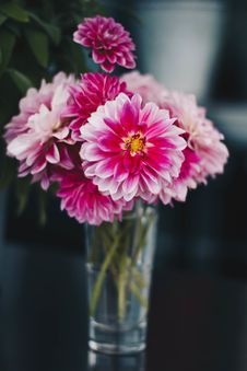 Free Pink Flowers On The Vase Royalty Free Stock Photos - 109911118