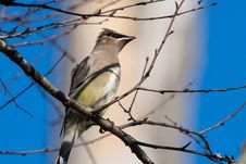 Free Gray Bird Perching On Tree Branch Royalty Free Stock Photo - 109911155
