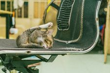 Free Cat Licking Chair Royalty Free Stock Images - 109911309