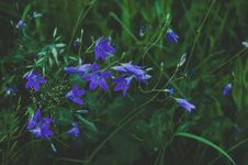 Free Selective Focus Photography Of Blue Flower Royalty Free Stock Photos - 109911368
