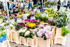 Free Assorted Flowers With Brown Wooden Rack Royalty Free Stock Photography - 109911377