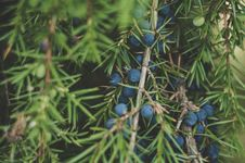 Free Green Leafed Tree Stock Photography - 109911382