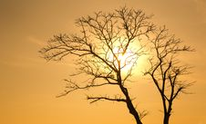 Free Silhouette Of Tree At Sunset Royalty Free Stock Image - 109911406