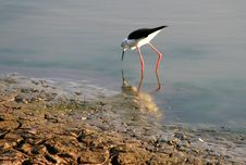 Free White And Black Long-beaked And Long Legged Bird On Body Of Water Photography Stock Photos - 109911463