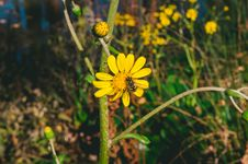 Free Yellow Flower With Bee Stock Images - 109911484