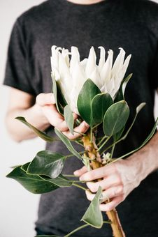 Free Man Holding White Petaled Flower On Bloom Stock Photography - 109911642