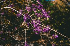 Free Selective Focus Photo Of Purple Cluster Flowers Stock Photography - 109911672