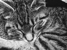 Free Tabby Cat Sleeping Stock Images - 109911674