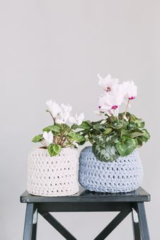 Free Two White And Blue Crochet Flower Pot Royalty Free Stock Photography - 109911687