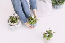 Free Person In Blue Sweater Holding Green Potted Plant Royalty Free Stock Photography - 109911717