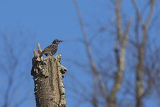 Free Brown Bird On Top Of Brown Tree Trunk Stock Photography - 109911752