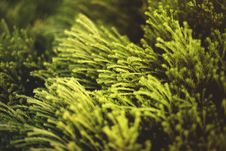 Free Close-up Photo Of Green Plants Royalty Free Stock Photography - 109911797