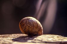 Free Shallow Focus Photography Of Brown Snail Royalty Free Stock Photos - 109911818