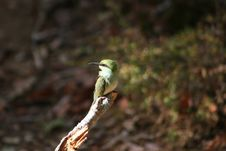 Free Green Long-beak Bird On Brown Wooden Tree Branch Royalty Free Stock Photography - 109912047