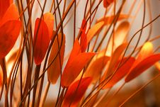 Free Selective Focus Photography Of Orange Petaled Flowers Royalty Free Stock Photos - 109912058