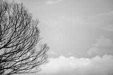 Free Black Tree Trunks And Sky Royalty Free Stock Photo - 109912135