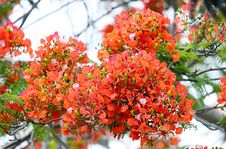 Free Shallow Focus Photography Of Orange Flowers Royalty Free Stock Images - 109912209